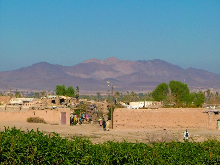Marrakech, palmeraie ⎜ Marrakesh, palm grove