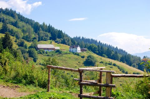 Alpages et forêts de Fohnsdorf ⎜ Alpine meadows and forests of Fohnsdorf