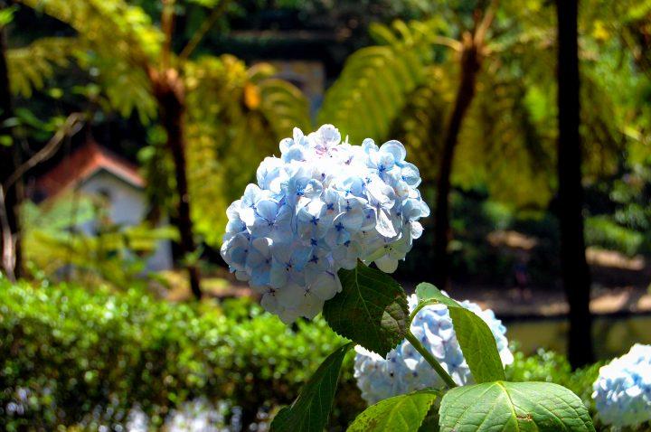 Funchal, Jardim Tropical Monte Palace